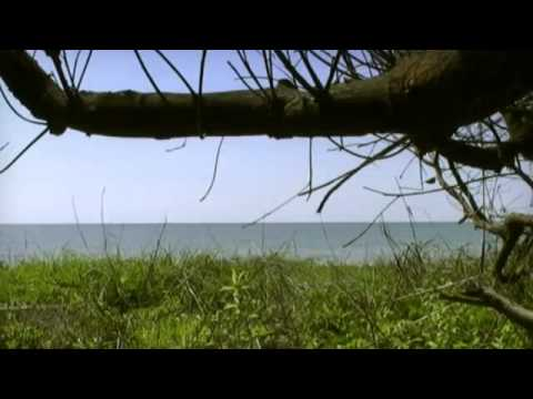 Le Gabon Vert