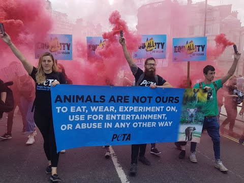 PETA UK's 2018 End-of-Year Highlights