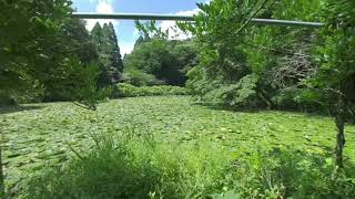 【VR】Relaxing in the  Swamp VR that makes you sleepy【VR180】