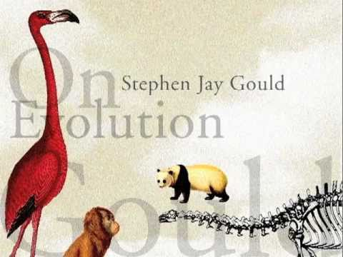 First Person: Stephen Jay Gould On Evolution