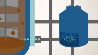 BIOGEN Bacterioenzimático