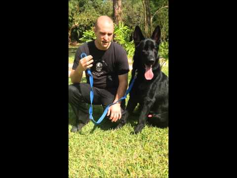 woof-dogs---dog-training-&-canine-behavior-consultants.-review/testimonial-by-john-&-caine