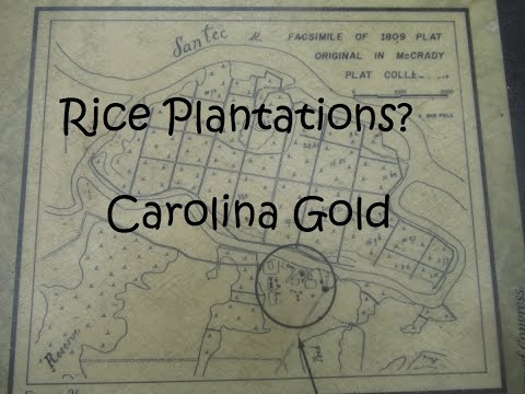 Rice Plantations?   Carolina Gold