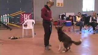 Building Drive By 'being' A Bad Dog Trainer Sdga