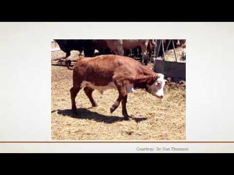 Dr. Eric Gordon - Bovine Castration/Dehorning Update
