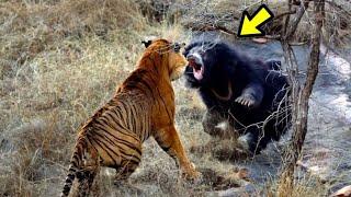 Cuando Te Metes Con El Animal Equivocado 2