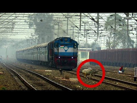 Patliputra Express on a Cats and Dog (Rainy) Day | Holy Cow and Dog Escape Death| Bad Video Exposure