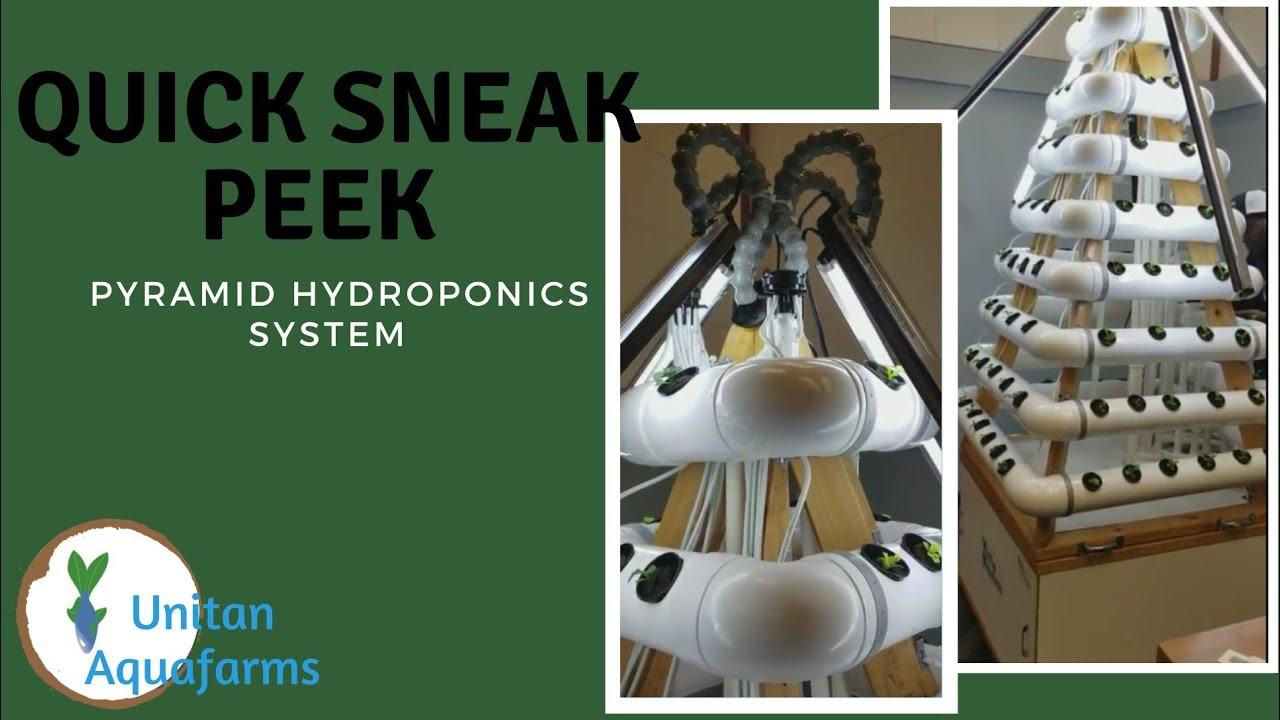 Hydroponic System - Sneak Peek of Full Setup!