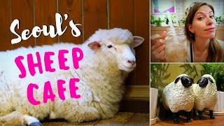 Sheep Cafe in Seoul, Korea: Visiting Thanks Nature Cafe (땡스네이쳐카페) in Hongdae (홍대)