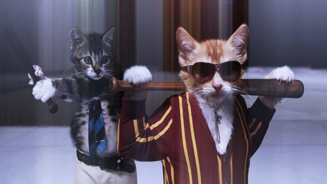 Супер ржачные коты
