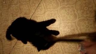 Отдам щенка в надёжные руки.