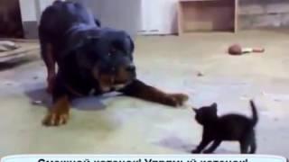 Приставучий котенок  и собака!