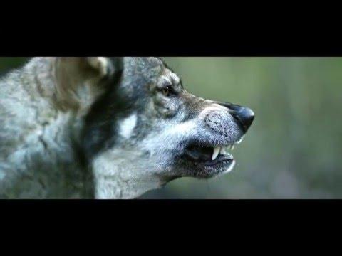 Sansar Salvo feat. Şanışer - Yarın Ölümü Beklemek Yerine (Official Video)(+18)
