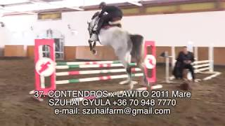 JUMPING HORSES FOR SALE 37. CONTENDROS x LAWITO 2011 Mare