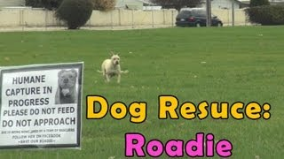 Dog Rescue: Roadie, an abandoned pitbull.  Please share.