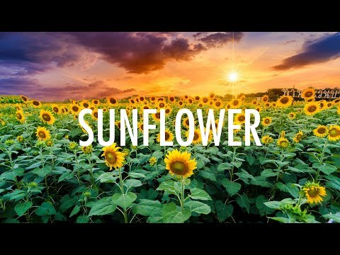 Post Malone, Swae Lee 鈥� Sunflower (Lyrics) 馃幍