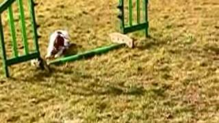 Agility Training - Precious Moments 4