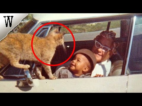 Ghost Cat Visits Family As Spirit | Pet Ghost Stories