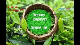 #Экстракт концентрат Зеленый чай // #Тайна Зеленого чая раскрыта