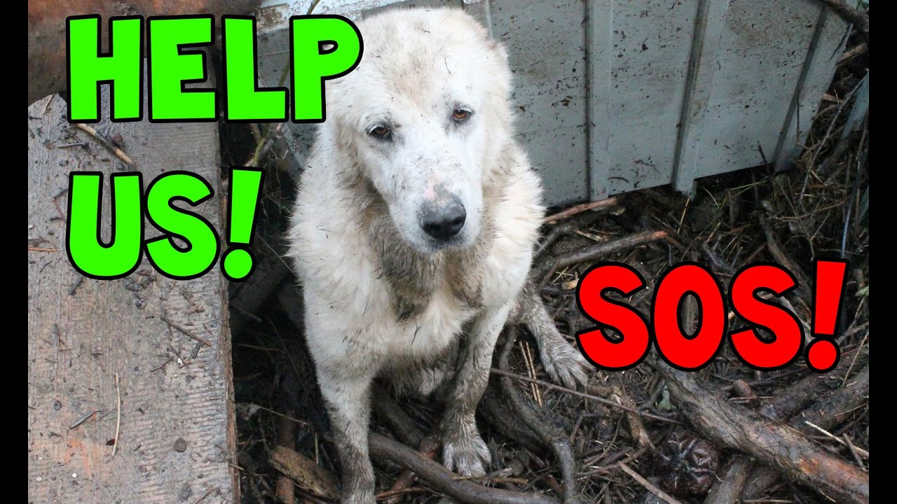 Homeless dogs need our help dog shelter flooded youtube for What a dog needs