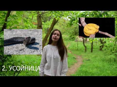 Топ 5 най-отровни змии в България