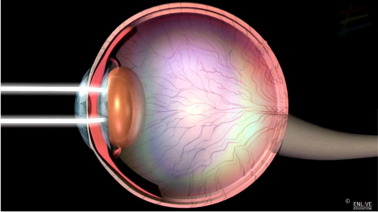 hight resolution of human eye diagram without label