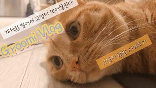 [구르미로그] 고양이캠핑장 | 홍대오브젝트 탐방 | 시…