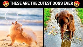 ❤️ Pictures Of The Best Dogs In The World ❤️