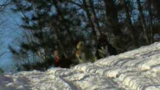 Haliburton Forest Dog Sledding Adventure Tours