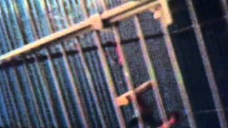lovebird cage setup