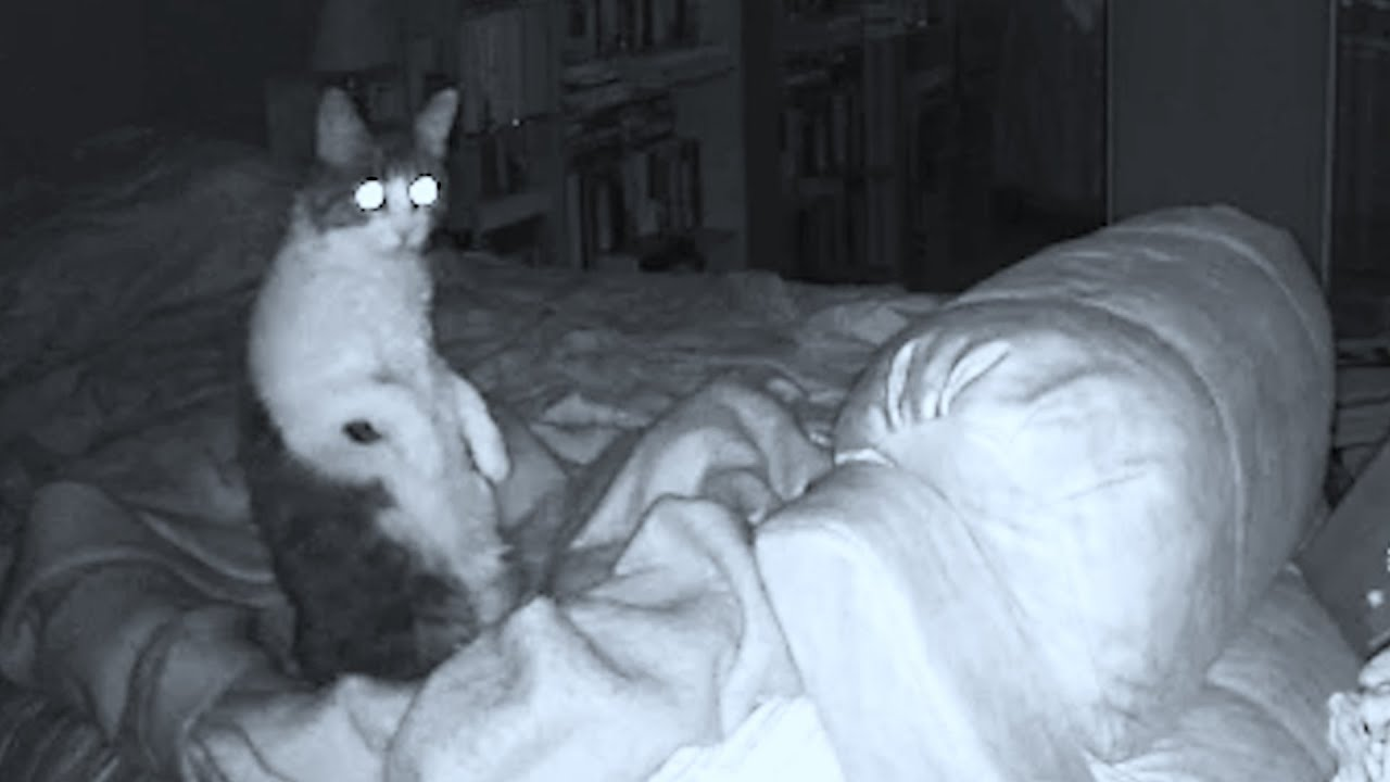 Download Real Ghost Captured on Camera Disturbing our Cats