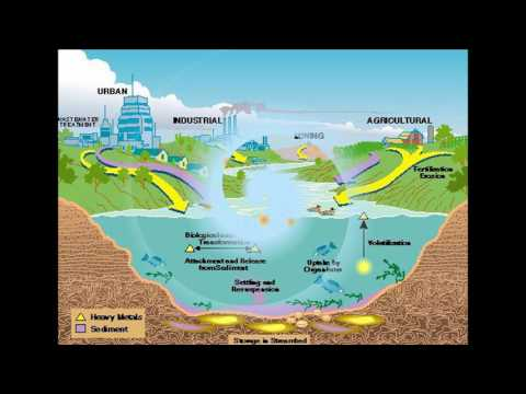 Water pollution with mercury and other toxins - all fish toxic   - mercury contamination rampant