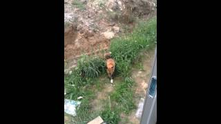 fox in Gaupne-Sogn og Fjordane