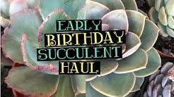 Early Birthday Succulent Haul| Sunset Nursery