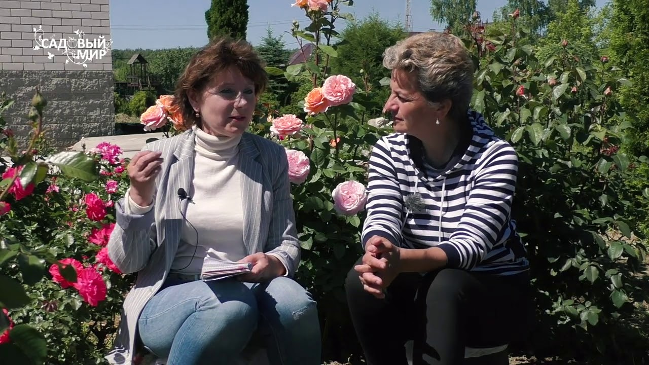 Цветов, питомник елены иващенко каталог роз с фото и ценами как заказать