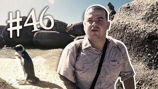Baixar #46 Przez Świat na Fazie - Wyjazd do Afryki