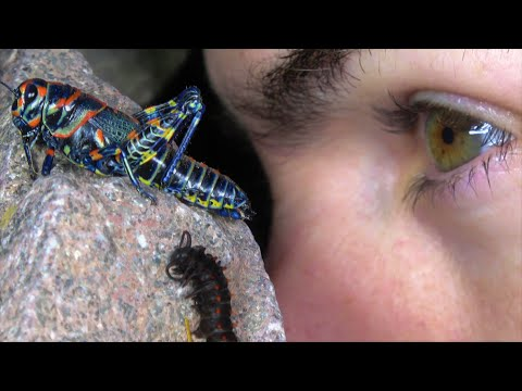 4K If Insects Ate Skittles: The Unknown Brings Great Surprises. Travel Herping Fishing Fun.