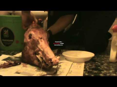 how to clean a boar  skull/come pulire un teschio di cinghiale