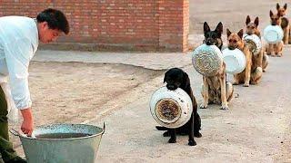 इनसे ज्यादा समझदार कुत्ते नहीं देखें होंगे आपने || The Most Disciplined Dogs in the World