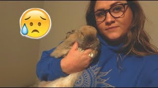 We Had to Give Up Our Bunny :( AND a Moving Mess Update