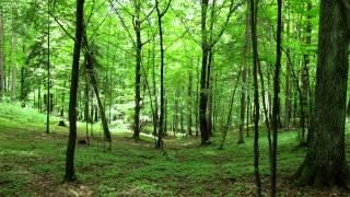 Meditaatiomatka - Tuulinen metsä