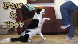 Paw & Foot In The Front Position: Canine Freestyle