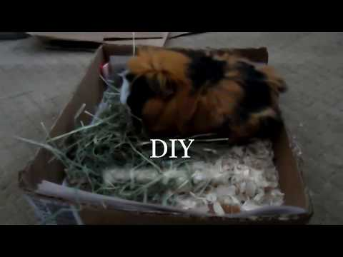 Easy DIY Guinea Pig Litter Box   Ash Paws