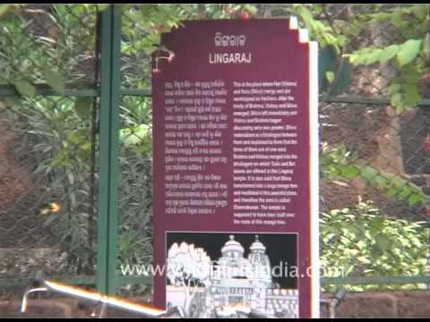 Pujaris of Lingaraj Temple in Bhubaneswar, Odisha