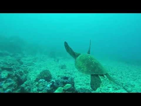 Leleiwi Hilo Hawaii Scuba Dive