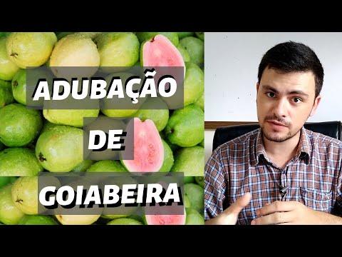 Adubação de GOIABEIRA