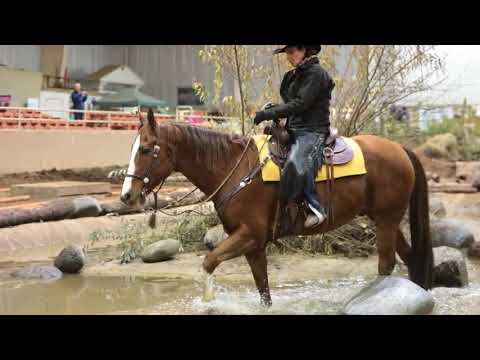 2017 Oregon Horse Center National Mountain Trail Championships