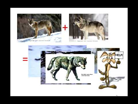 Analysis of ancient DNA reveals details about the dire wolf ...
