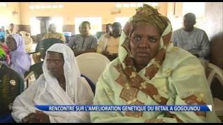 Gogounou : rencontre des éleveurs sur l'amélioration génétique du bétail
