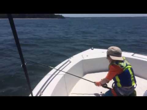 IT'S A SHARK!!!! Northport, NY Long Island Sound